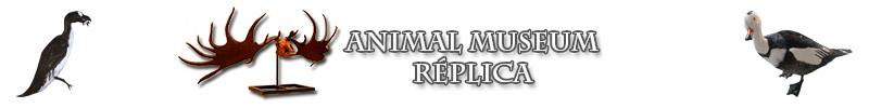 Animal Museum Replica
